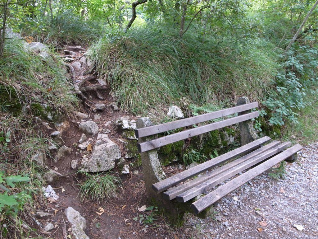 林道に設けられたベンチ