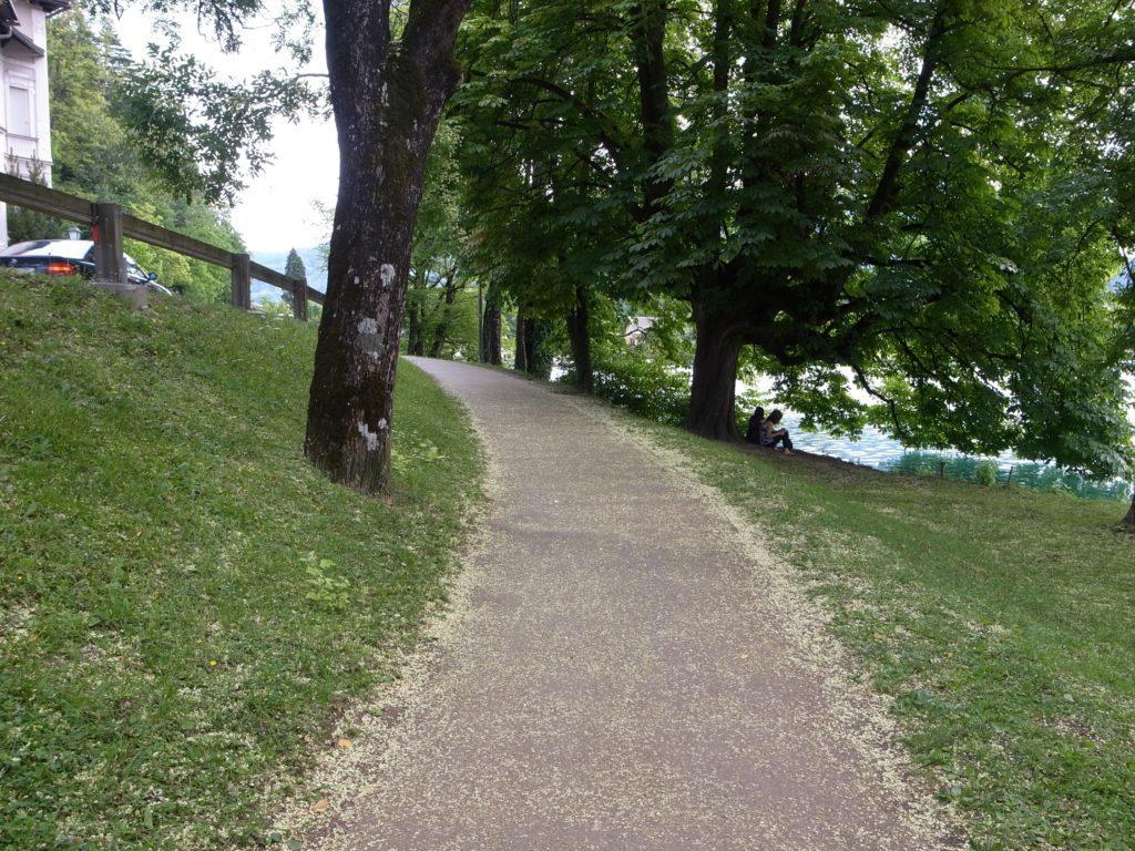 湖の遊歩道