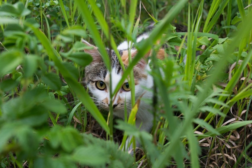 草むらに潜む猫