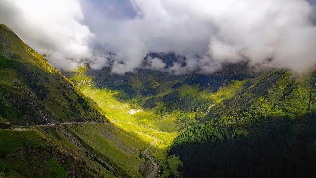 ルーマニアの針葉樹林
