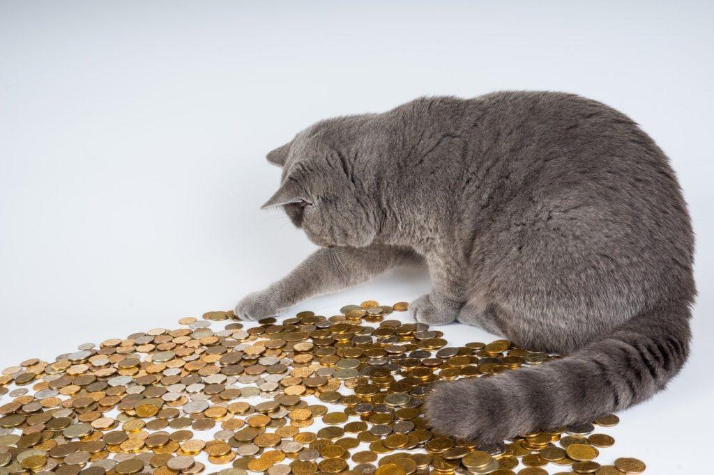コインで遊ぶ猫